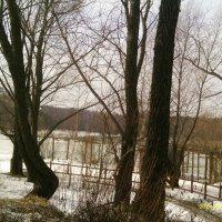 Деревья, зима :: gor4inka Koryagina