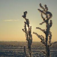 Морозное утро :: Михаил Ананьев