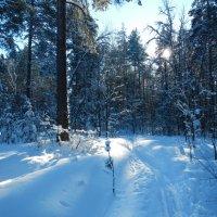в тени  деревьев :: Вик Токарев