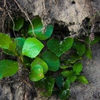 Растение :: Григорий Никитин
