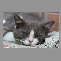 Старый кот :: Олег Сурин