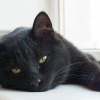 Кошка. :: Виталий Меркл