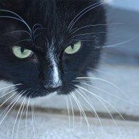 Рыночный кот вышел на воробьинную охоту :: MVMarina