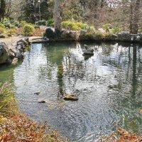 в парке у озера :: valeriy g_g