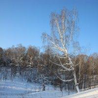 Зима :: Marina Gunbina