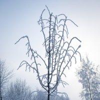 Зимние зарисовки :: Валерий Пшеницын