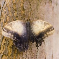 Бабочка на дереве :: Светлана Белова (Груздева)