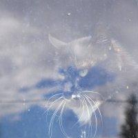кот в облаках :: Мария Кобылина