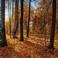 Осень :: Валерий Молоток