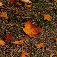 Осенний ковер. :: ФотоЛюбка *