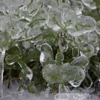 Январь-дождь :: Мария Авдонина