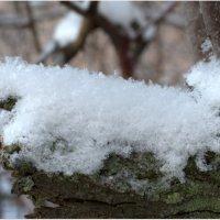 Пушистый снег :: Галина (Stela) Кожемяченко