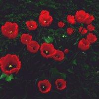 А на нейтральной полосе цветы - необычайной красоты :: Нина северянка