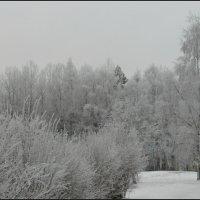 На прогулке :: Ljudmila Korotkova