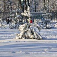 зима2014 :: рустам минсадыров