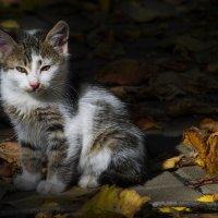 На ковре из жёлтых листьев... :: Татьяна Сандулова