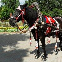 прогулка в парке :: Евгения Латунская