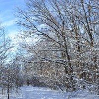 зима :: Елена Бобыкина