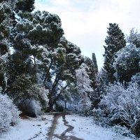 Зима :: Михаил Лаврук