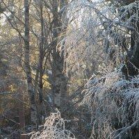 А лес стоит загадочный... :: Марина Морозова