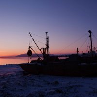 Не улетай на север, там только снег, мороз и льдины. :: Aleksei Gilev