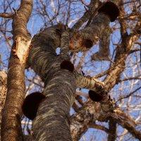 Тоже грибы :: Жанетта Буланкина