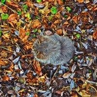 Блуждающий Котёнок :: Александр Головко