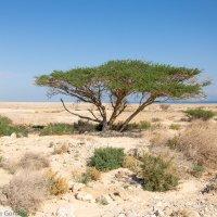 На побережье Мертвого моря :: Владимир Горубин