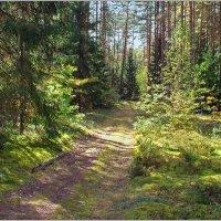 Солнечные зайчики в лесу. :: Роланд Дубровский