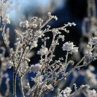 Букет Снежной королевы :: Татьяна Сухова