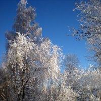 Кудрявая зима :: Наталья Ерёменко