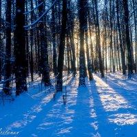 Мороз и солнце... :: Сергей Арсланов