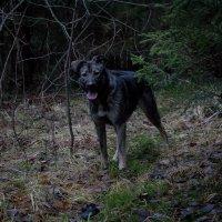 Прогулка в лесу. :: Любовь Анищенко