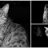 Кошка (коллаж) :: Елена Севастьянова