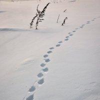 Кто-то из лесу вышел... :: Василий Хорошев