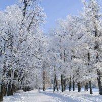 Зимний пейзаж. Елагин остров. :: Irina Sergeeva