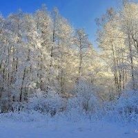 Мороз и солнце...- Зима душу греет!. :: Виталий Половинко