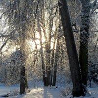 Зимнее утро :: Юрий Цыплятников