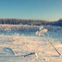 Поле, русское поле.... :: Juliya Fokina