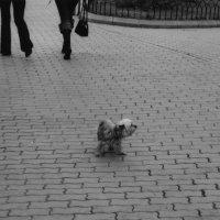 Найдите меня... ну, пожалуйста.... :: Алексей Ярошенко