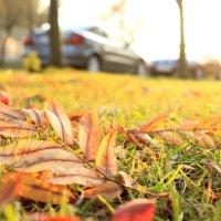 Восени :: Соломія Палига