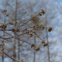 Алапаевск весной :: ARTEseniya Кристина Вальтер