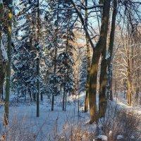 Старый парк. :: Юрий Шувалов