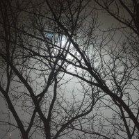 Туман :: Лия Таракина