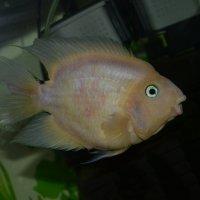 Рыбка :: Богдан Петренко