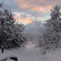 Зимняя дорожка. :: Igor Shoshin