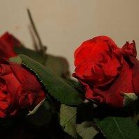 Красные цветы :: Олександра Сидор