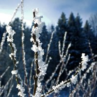Зимние наряды :: Юрий Митенёв