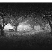 ...туманное утро... :: Elu Sepp