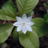 Маленький цветочек :: Александр Головко